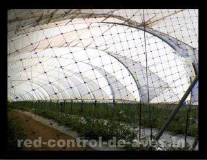 GUACAMALLAS instalada en forma de túnel