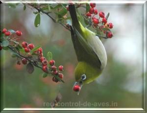 Ave en campo sin red control de aves