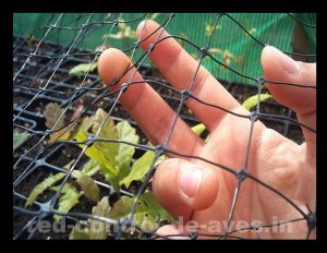 Malla antipájaros protege a tus frutos de las aves.