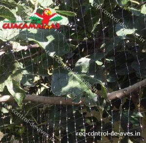 malla GUACAMALLAS instalada para proteger arborles